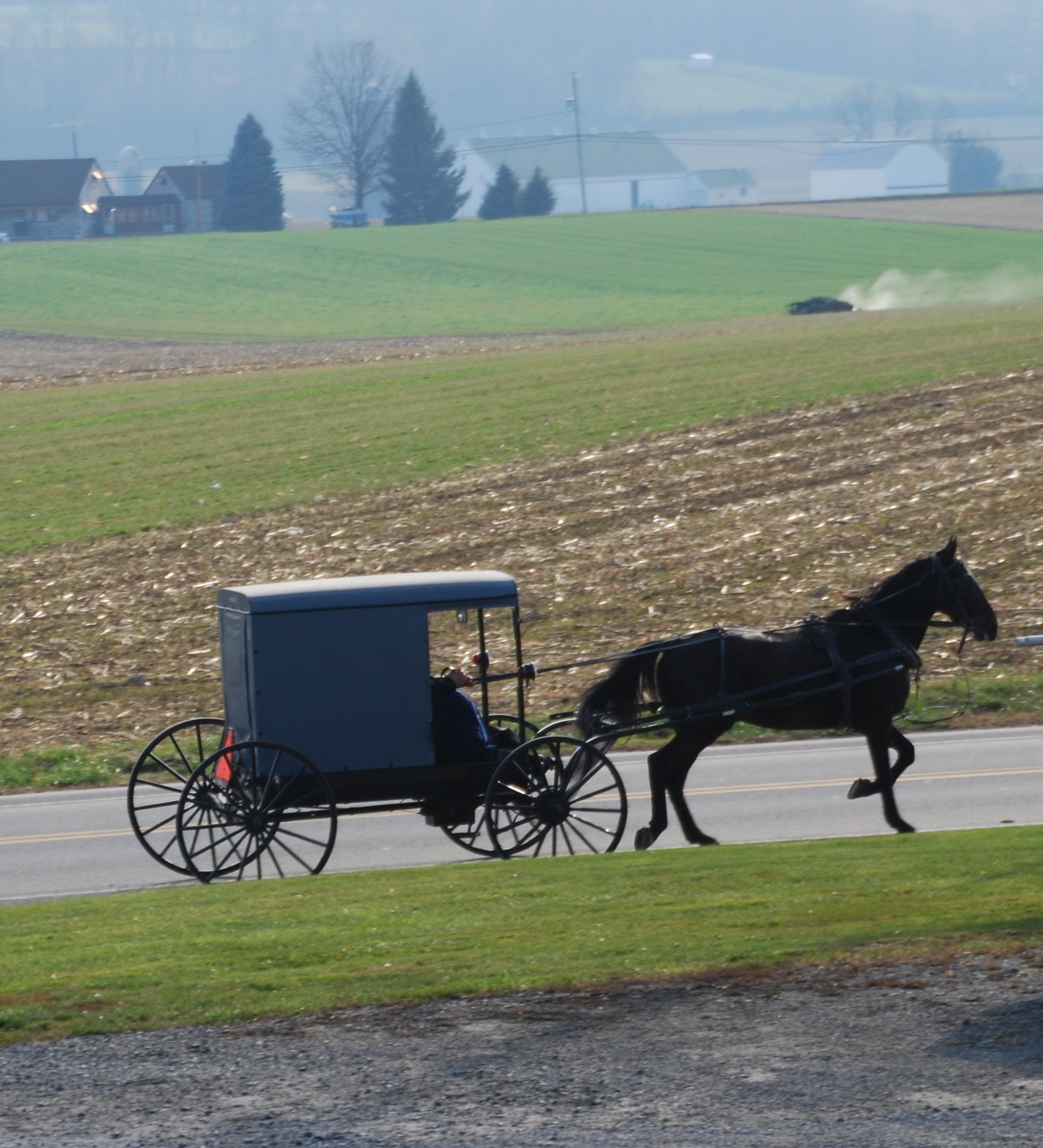 Amish buggy. Photo by Adina Senft